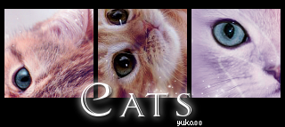 icons_cats