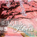 tag_cherries_flowers